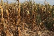 Čeští zemědělci chtějí odškodnění za sucho srovnatelné s Německem
