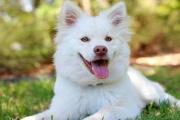 Chov psa a dodržování pravidel a předpisů musí ladit dohromady také v roce 2020, jinak hrozí pokuty
