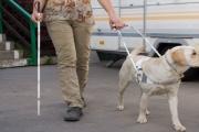 Dočasné osvobození nevidomých podnikatelů od EET se má projednávat 11. října