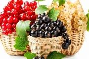 Rybíz z tuzemských ovocných sadů zřejmě brzy zmizí a nebude prvním takto postiženým ovocem