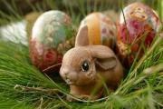 Velikonoční zboží včetně pomlázek a dekorací mohou maloobchody prodávat