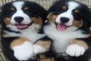 Veterinární zákon už zřejmě brzy opět zpřísní pravidla pro chov psů