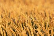 Žádosti o odškodnění za loňské sucho bude v zemědělství možné podat v červnu
